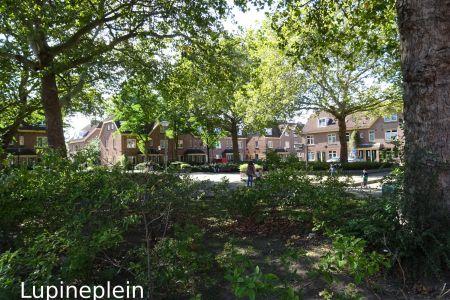 Lupineplein(k).jpg